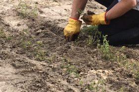 DADAA | handsin yellow gloves gardening