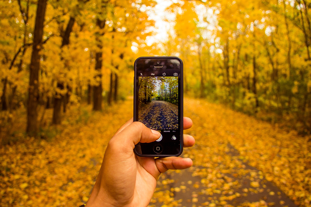 DADAA | Close up of hand holding phone using camera on country path in fall forest
