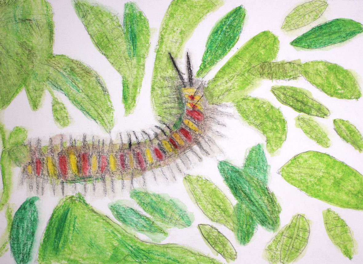 DADAA | Tim Maley caterpillar drawing from Specimens exhibition. Photo Lindsay Humphries