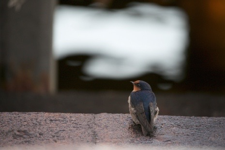 DADAA | photography exhibition | photograph of bird sitting on concrete surface